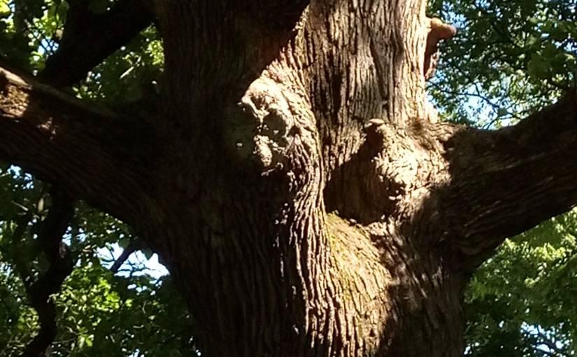 Oak Blessing