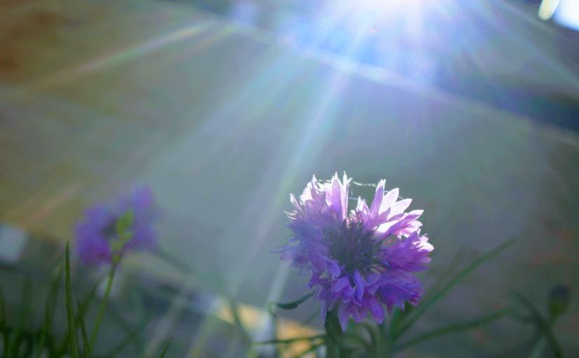 Rising Into Sun